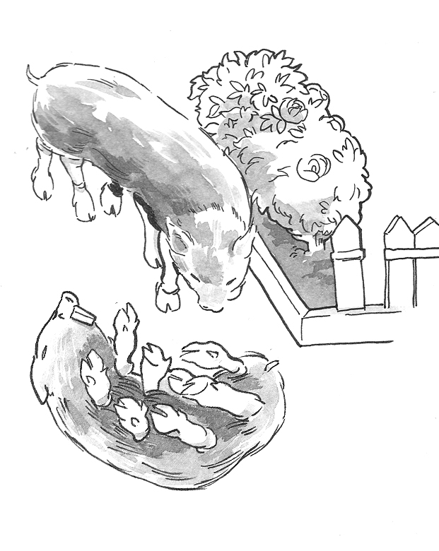 Two drawings of an eight legged long pig covered in fur with mole teeth.  One of the pig walking near a mini-garden, <a href=